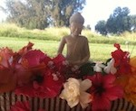 Buddha statue in lei of Hawaiian flowers