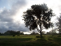 Sun Tree on land-2012